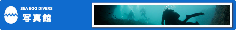 SEA EGG DIVERS 写真館