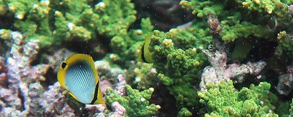 白崎の枝サンゴ